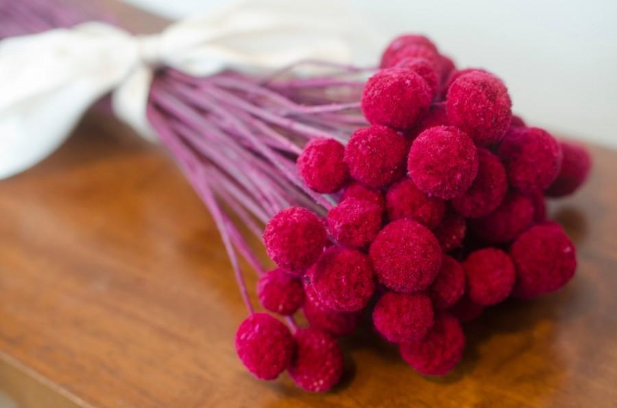 Wedding - Bunch of Fuschia Craspedia, Billy Balls, Billy Buttons, Regular or Mini, Fuschia Dried decor, modern decor, modern wedding, wedding decor