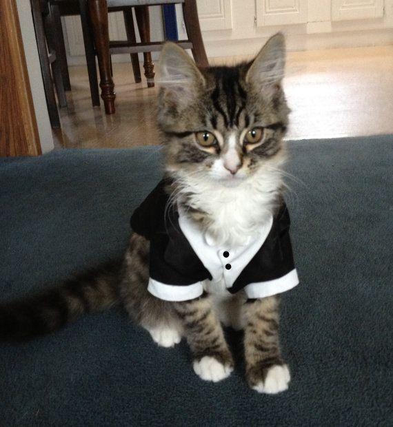 Wedding - Cats