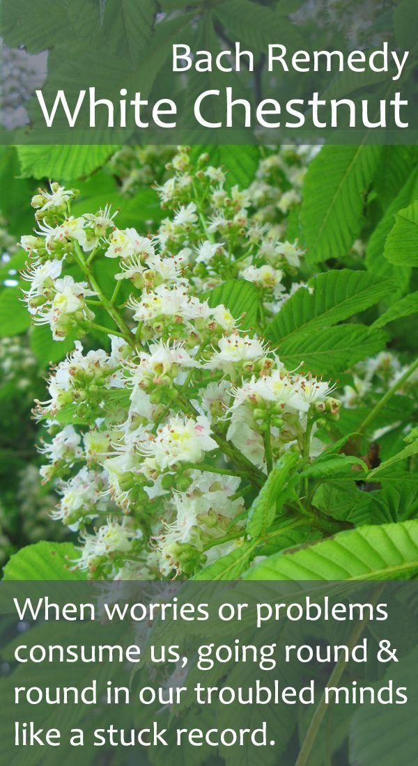 Bach flower white chestnut