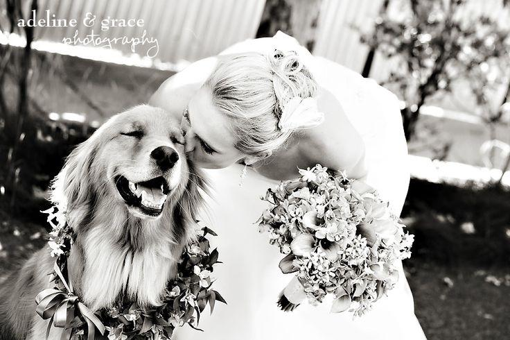 "Свадьба - 21 Adorable Wedding Pets To Make You Say ""Awwww!"""