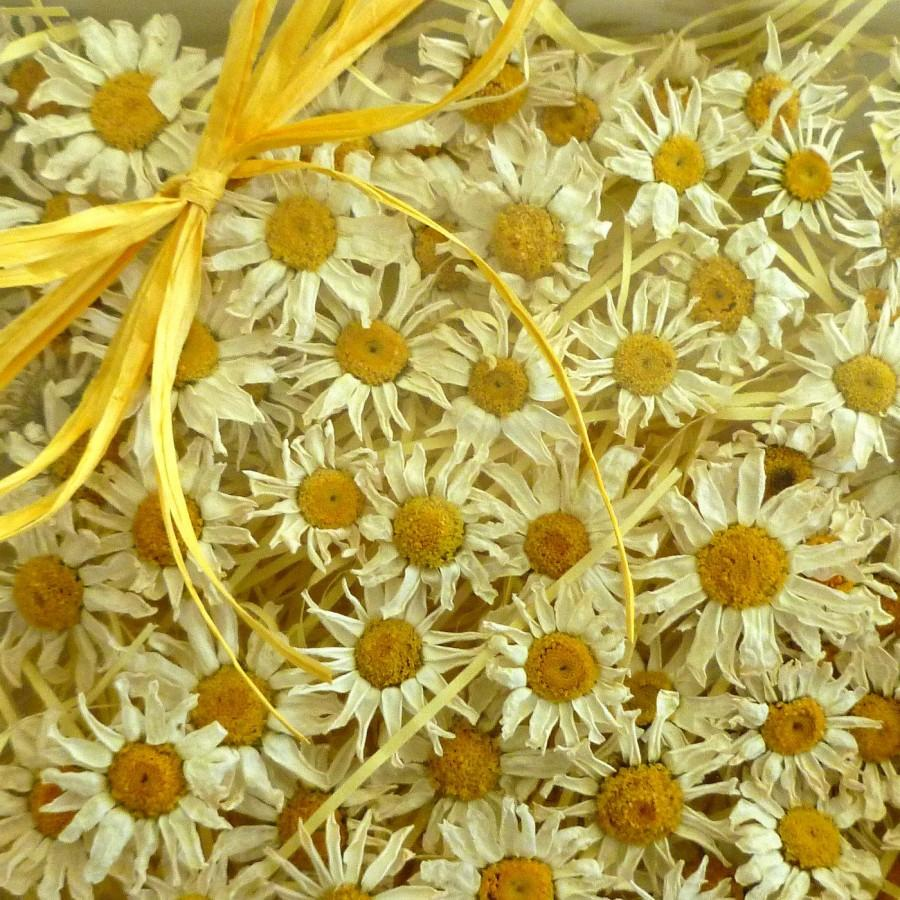100 Small White Daisies Yellow And White Dried Daisies Wedding