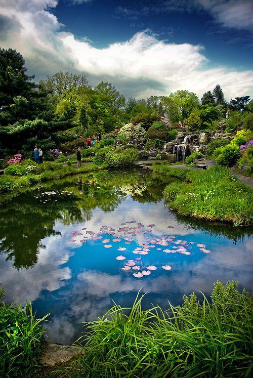 زفاف - Oslo Botanical Garden, Norway (by Faisal!) (All Things Europe)