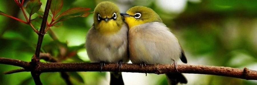 Mariage - nice bird