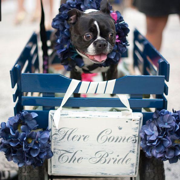 زفاف - 21 Impossibly Adorable Wedding Day Dogs