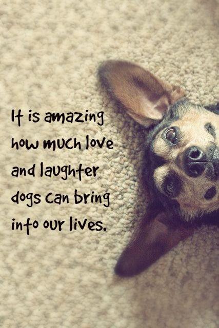 زفاف - Dog Quote Inspiration