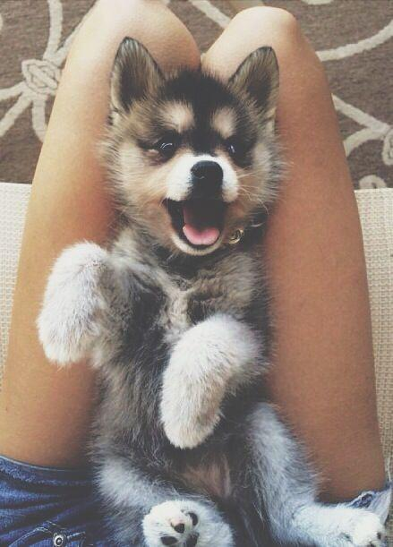Свадьба - 5 Reasons Why Dogs Are Better Than Guys