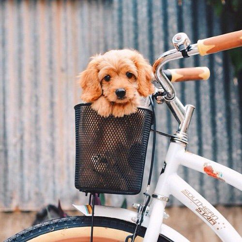Свадьба - 11 Times This Ridiculously Cute Mutt Made Us Yearn For Puppy Breath