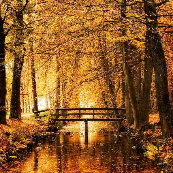 Boda - Fotografia Da Natureza Por Oer-Wout