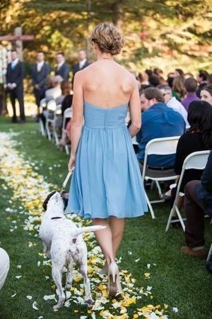 Wedding - The Definitive Guide To Including Your Pup On Your Special Day
