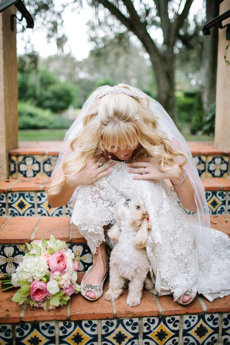 زفاف - Dogs In Weddings
