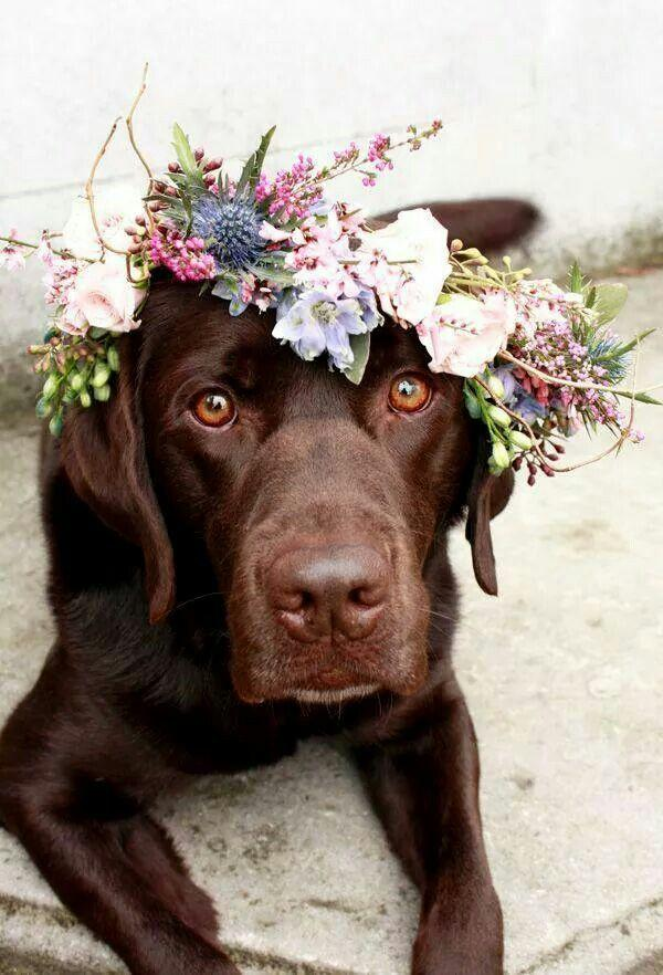 Wedding - Two Labs Model A Flower Crown