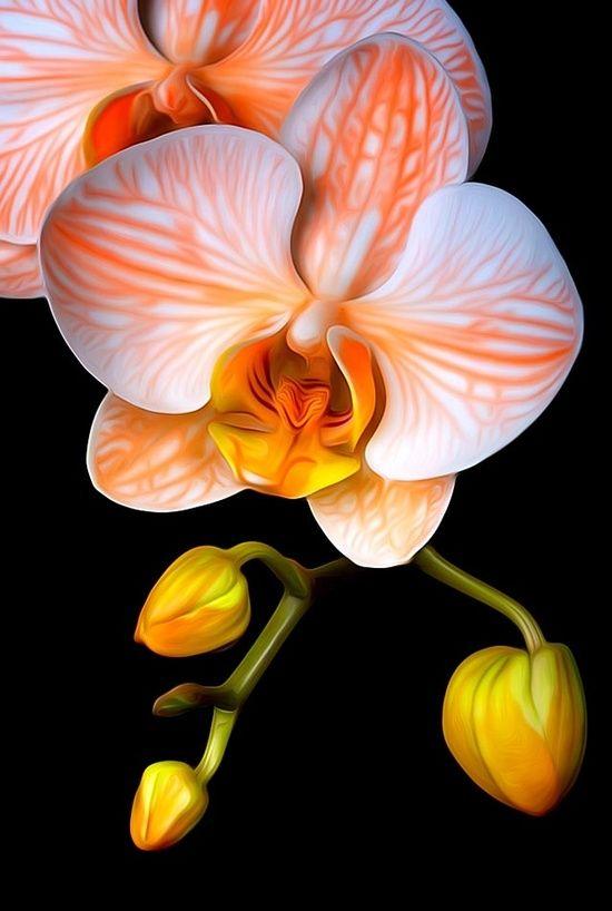 Hochzeits Thema Pretty Flowers 2552095 Weddbook