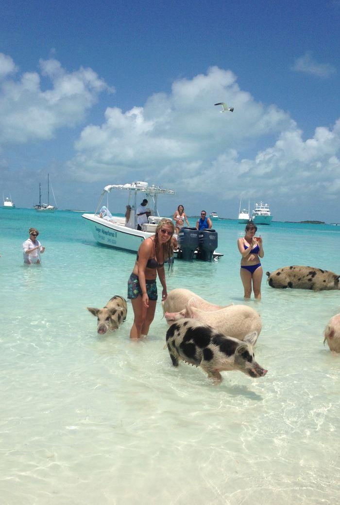 Mariage - The Swimming Pigs In The Exumas (Bahamas