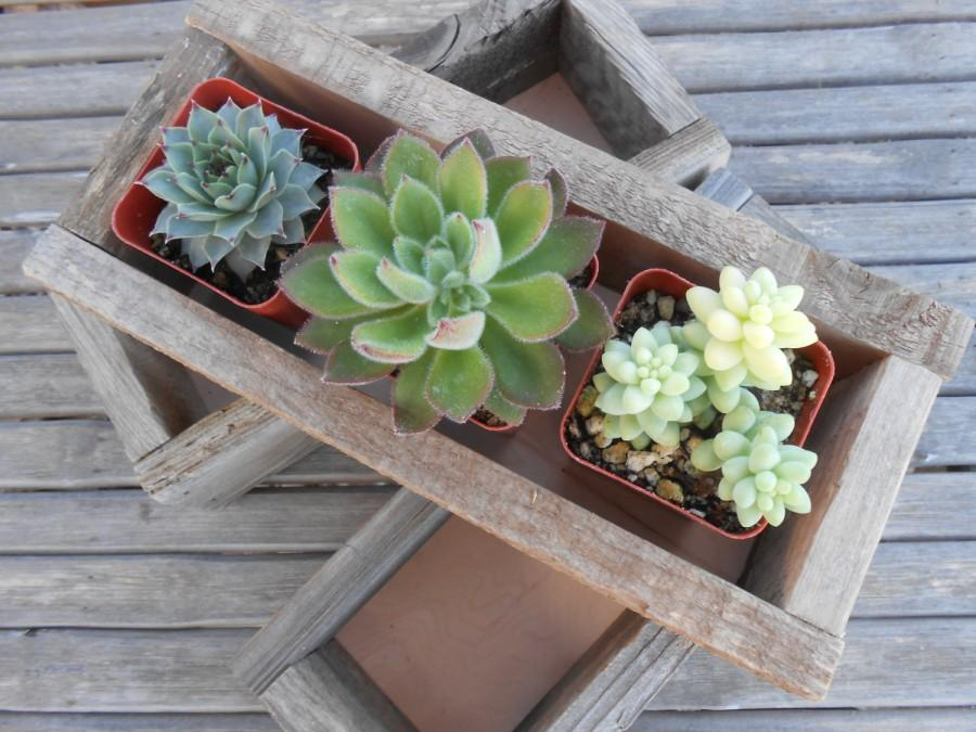 "Wedding - 2 Rustic Wedding Boxes, 10.5"" x 5"" x 2.5"", Centerpiece, Decor, Succulent Planter, Barn Wedding, Reclaimed Wood"