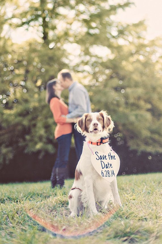Hochzeit - 29 Perfectly Adorable Ways To Include Your Pet In Your Wedding