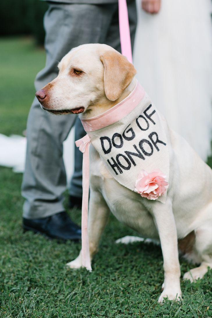 Wedding - DIY Painted Burlap And Rose Dog Collar