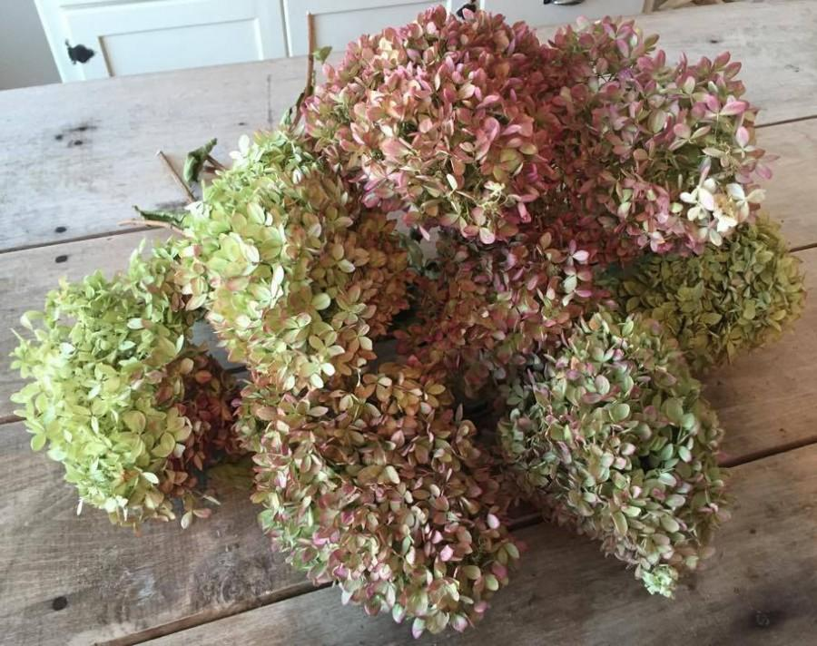 Large Dried Hydrangea Bouquet Large Bunch Of Naturally
