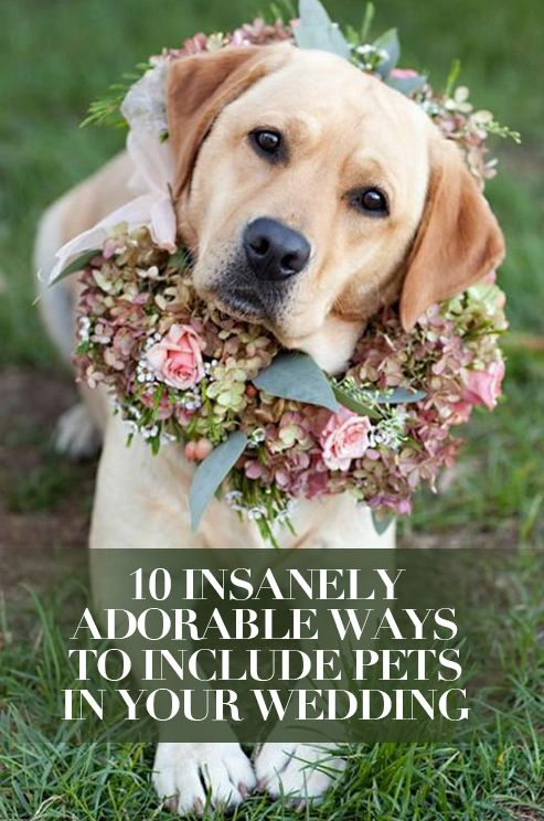 Mariage - 10 Insanely Adorable Ways To Include Pets In Your Wedding