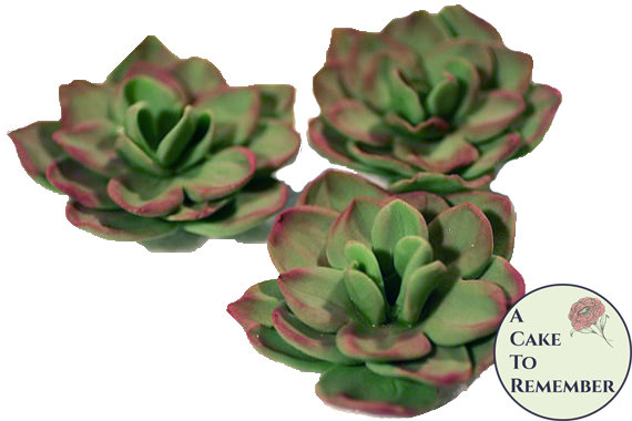 "Hochzeit - Three 2 1/2"" unwired edible succulents for unique wedding cake toppers, edible flowers, gumpaste sugar flower, DIY wedding cakes"