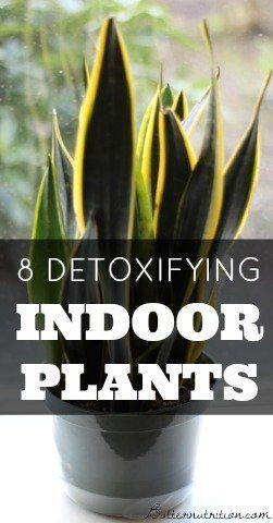 Wedding - 8 Detoxifying Indoor Plants That Act Like Air Filters