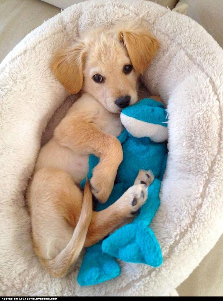 Boda - 16 Dogs Who Are Best Friends With Their Stuffed Animals