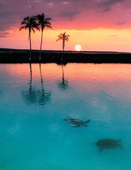Свадьба - Caribbean Honeymoon