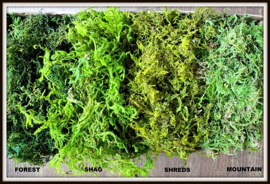 Hochzeit - BULK Moss- 1 1/2  pounds of REAL moss in 5 styles-Basket moss-Preserved Sphagnum Moss-Wedding Decor-Woodland moss