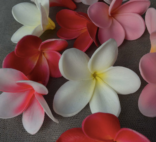 Natural real touch white artificial silk frangipani plumeria flower natural real touch white artificial silk frangipani plumeria flower heads for cake decoration mightylinksfo
