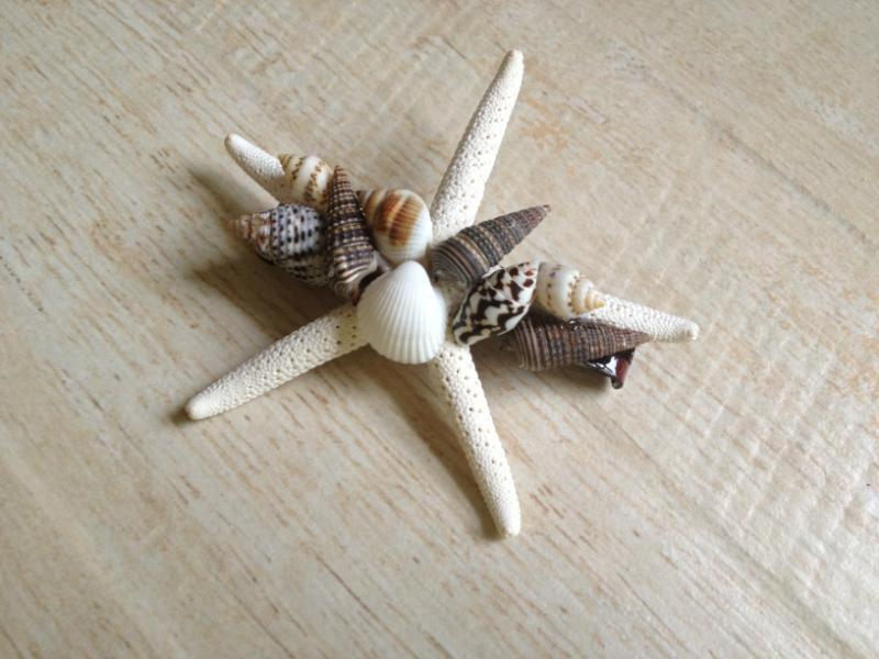 Свадьба - Starfish Shell Hair Clip Ocean Hairstyle Beach Wedding Mermaid Costume Halloween Hawaiian Luau Summer Seashore Tropical Surfer Girl Barrette