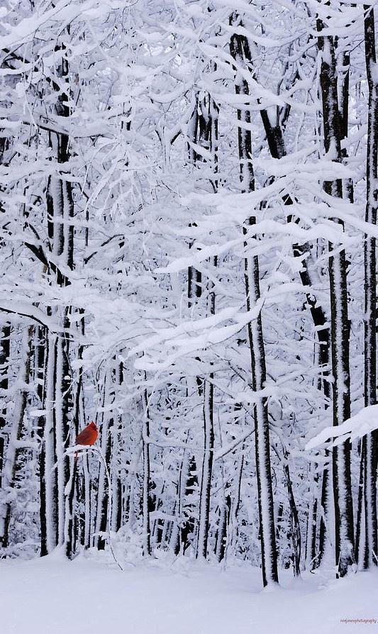 Свадьба - snowfall place