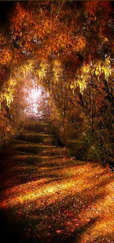 Hochzeit - Beautiful Autumn