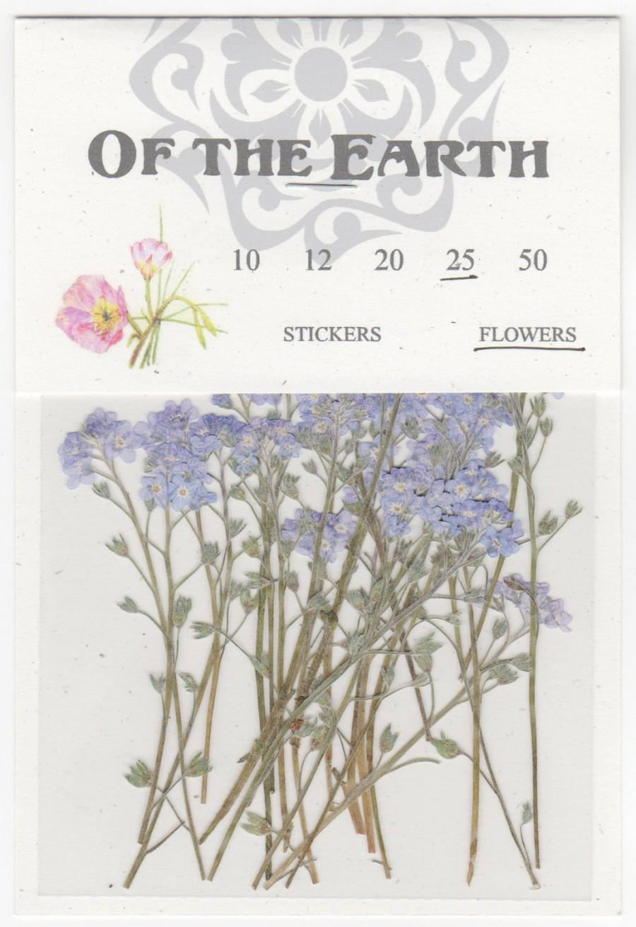 Wedding - Forget Me Not Pressed Flowers - pack of 25  3 inch tall (+/- 1/2 inch) blue petal stemmed flower