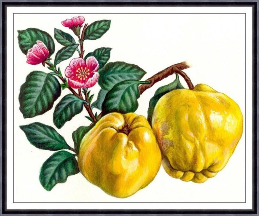 Wedding - Fruit print,fruit painting, botanical art print , Apple,kitchen decor,kitchen wall art