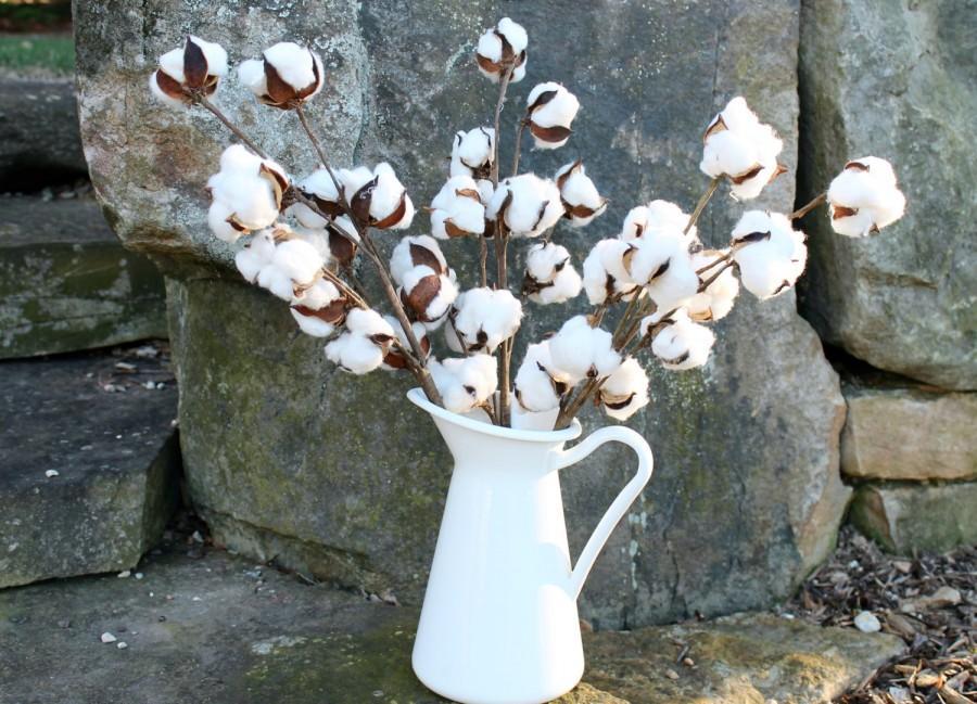 "Свадьба - Cotton Boll Stems, Set of 3-20"" Cotton Stems, Cotton Branches, Natural Cotton Bolls, Farmhouse Decor, Rustic Wedding Decor, 2nd Anniversary"