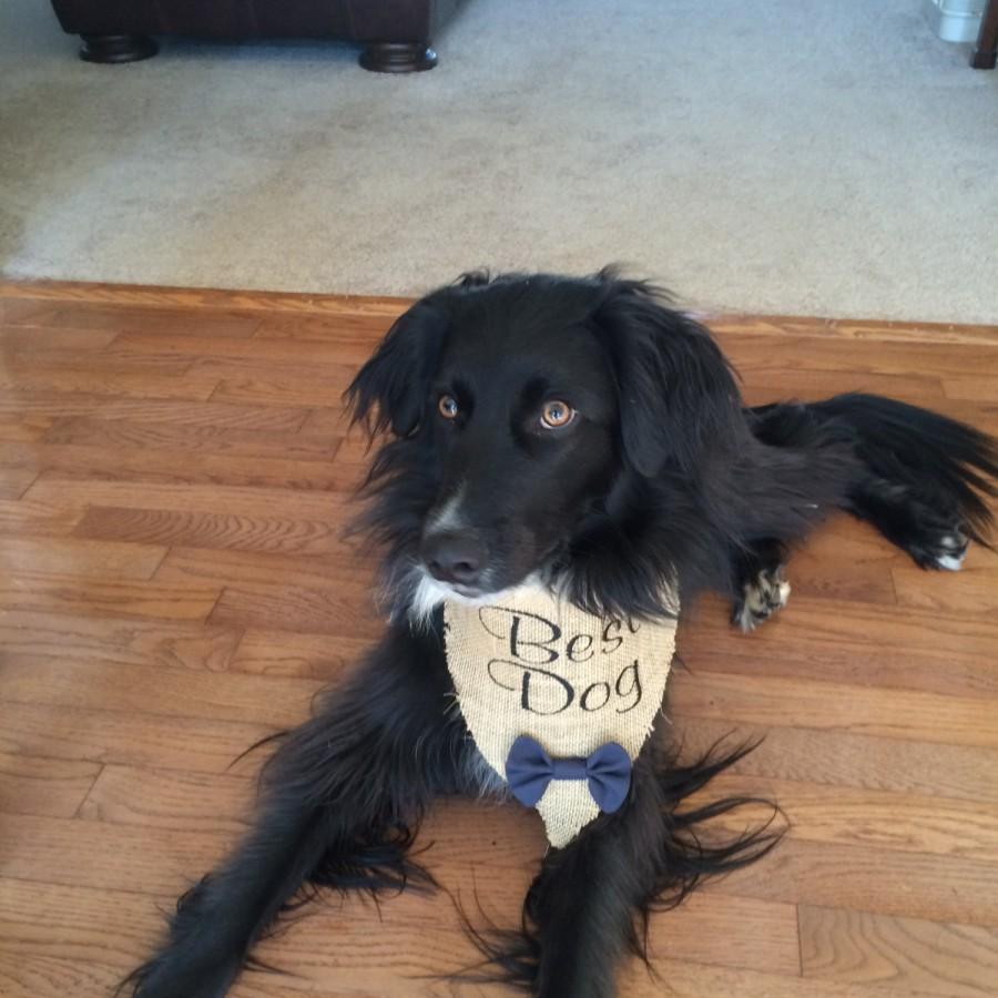 زفاف - Burlap Best Dog Wedding Bandana