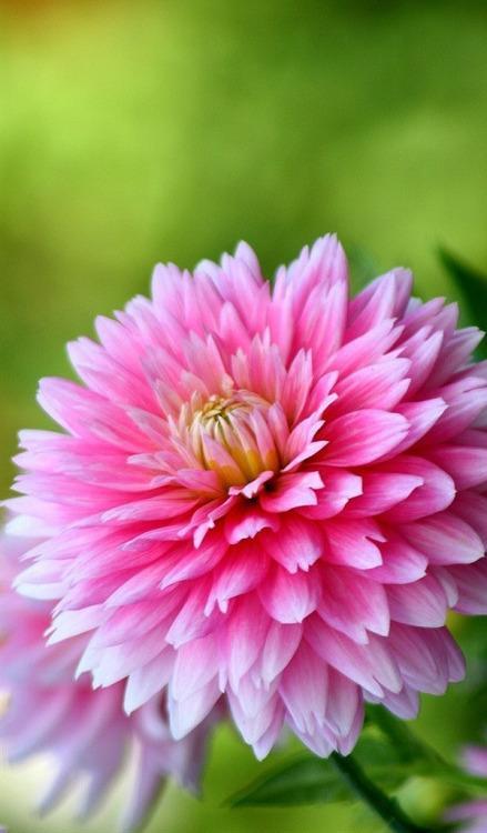 Свадьба - Dresswe Flower Reviews
