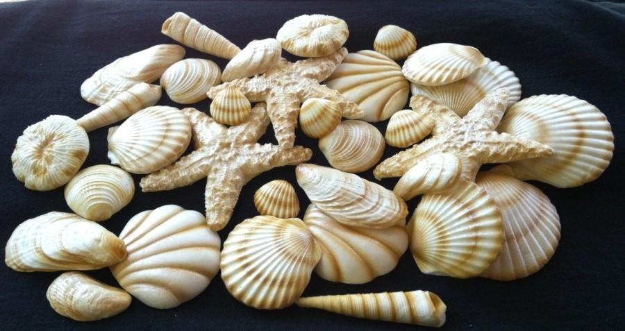 Mariage - 20 Piece Edible Gum Paste Seashells