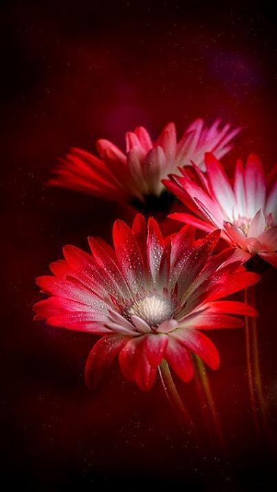 Hochzeit - Dresswe Flower Reviews
