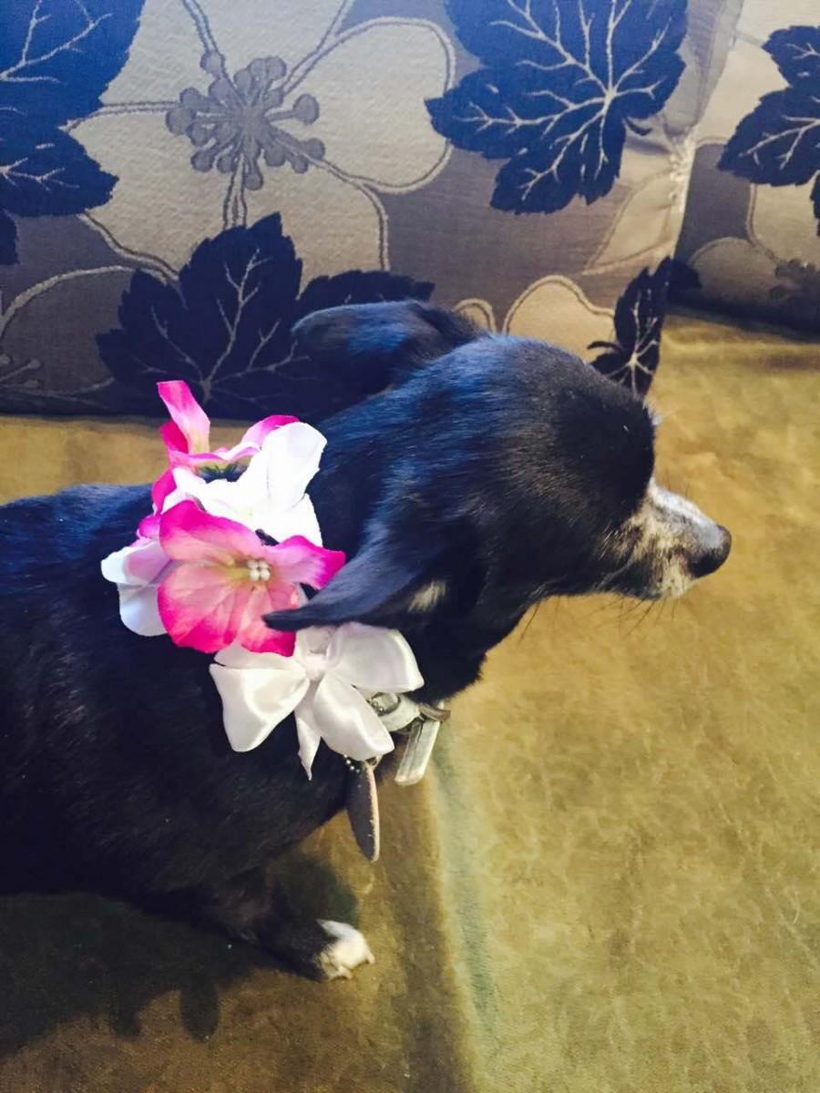 dog flower girl fuchsia white wedding dog collar pet