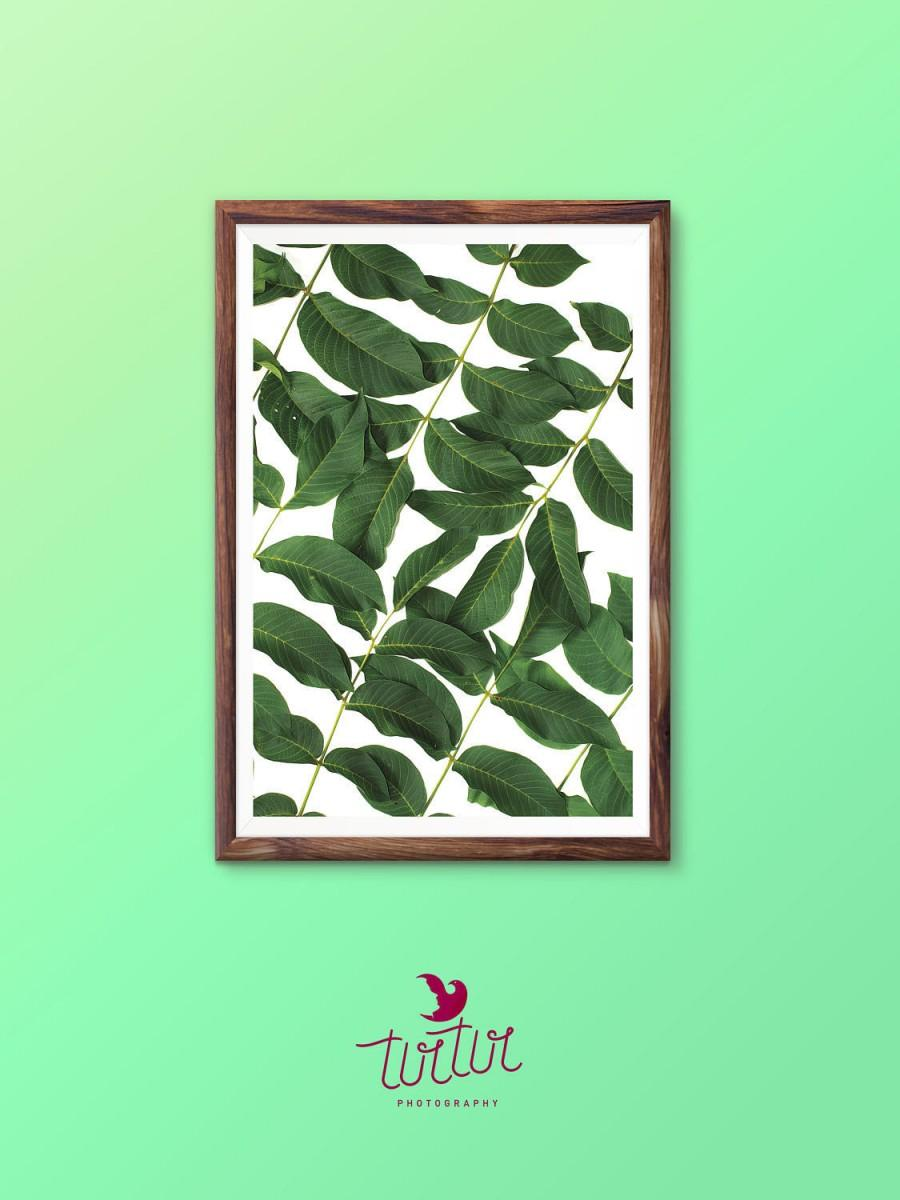 Leaf Wall Art Print Tropical Plant Photo Printable Wall Art Digital  Download Green Leaves Photography Palm Leaf Print Tropical Wall Art Mint