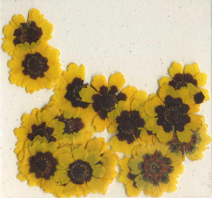 Hochzeit - Sunflower Pressed Flowers - pack of 25  1 inch diameter yellow petal dark brown center