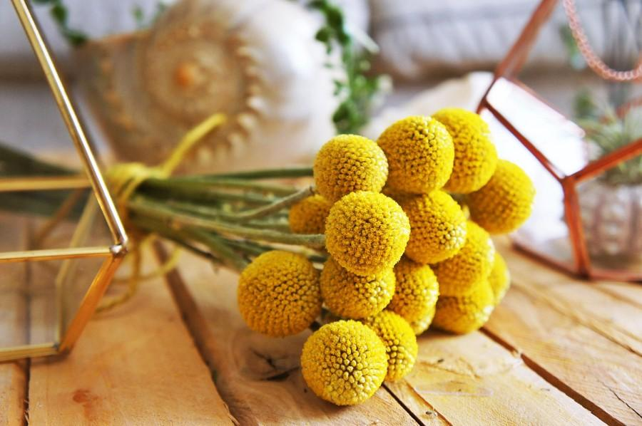 10 400 x dried billy buttons dried crapedia flowers dried yellow 10 400 x dried billy buttons dried crapedia flowers dried yellow ball dried flower arrangement wedding bouquet craspedia flowers mightylinksfo