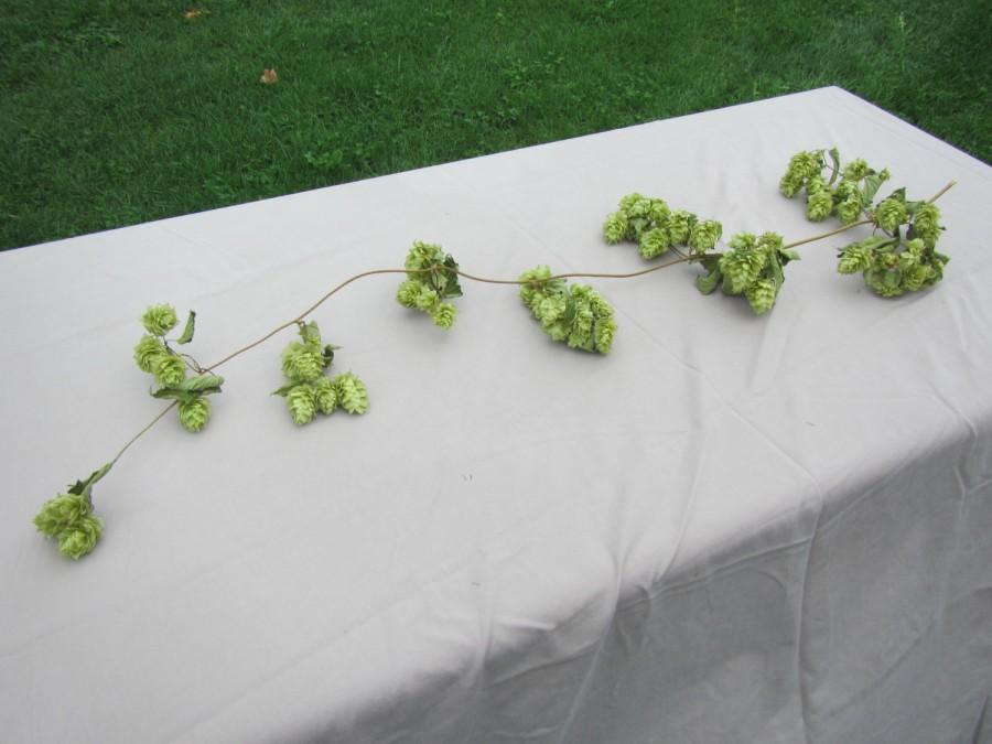 Natural Hops Vine 3 Ft Long Dried Hops Garland Wedding Table