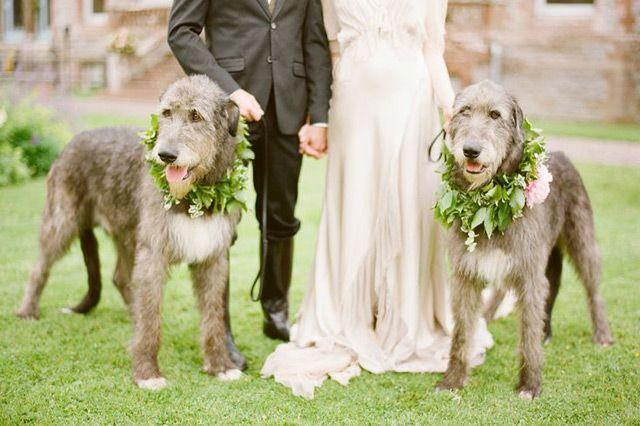 Hochzeit - 16 Perfect Photos Of Pets At Weddings