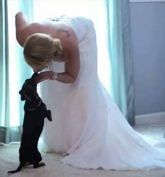 Boda - Dachshund – Friendly And Curious