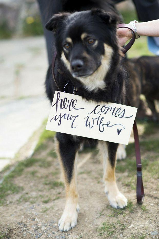 Mariage - 15 Cute Ways To Get Your Dog Wedding Ready