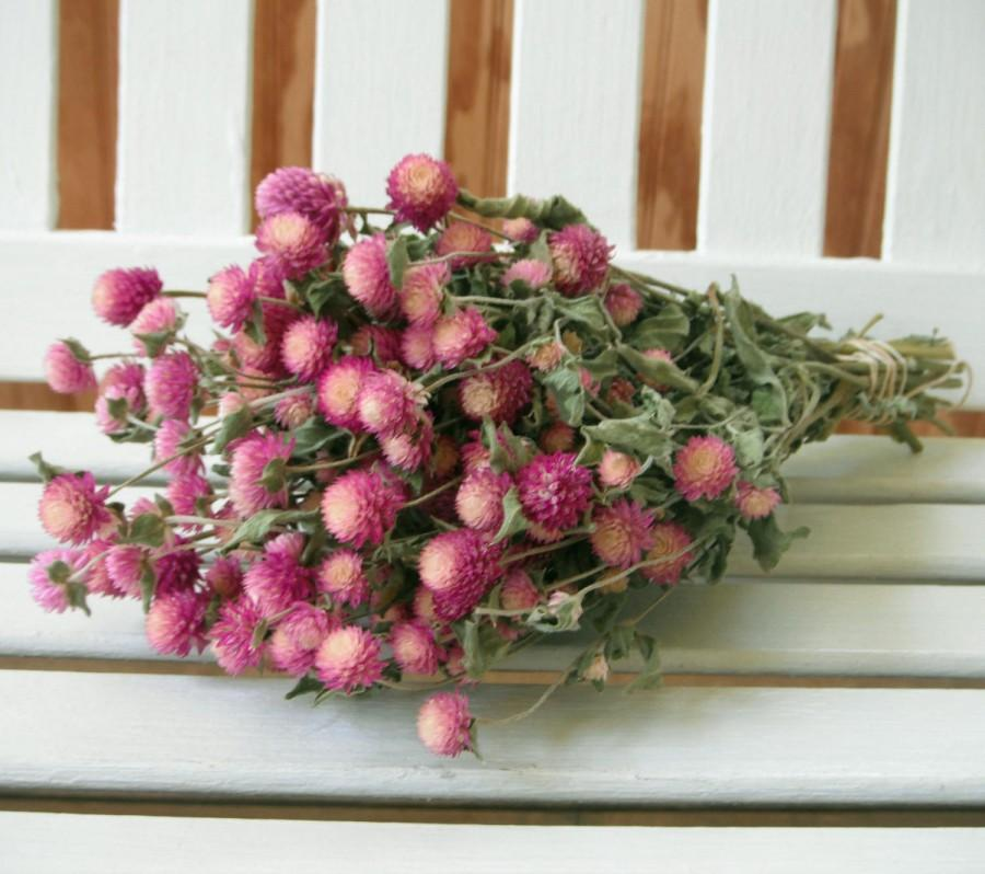 Mariage - DRIED FLOWERS bi-colored Lovely Rose pink / cream color Globe Amaranth Flowers gomphrena flower bunch, Prim, Wedding, Shabby cottage floral