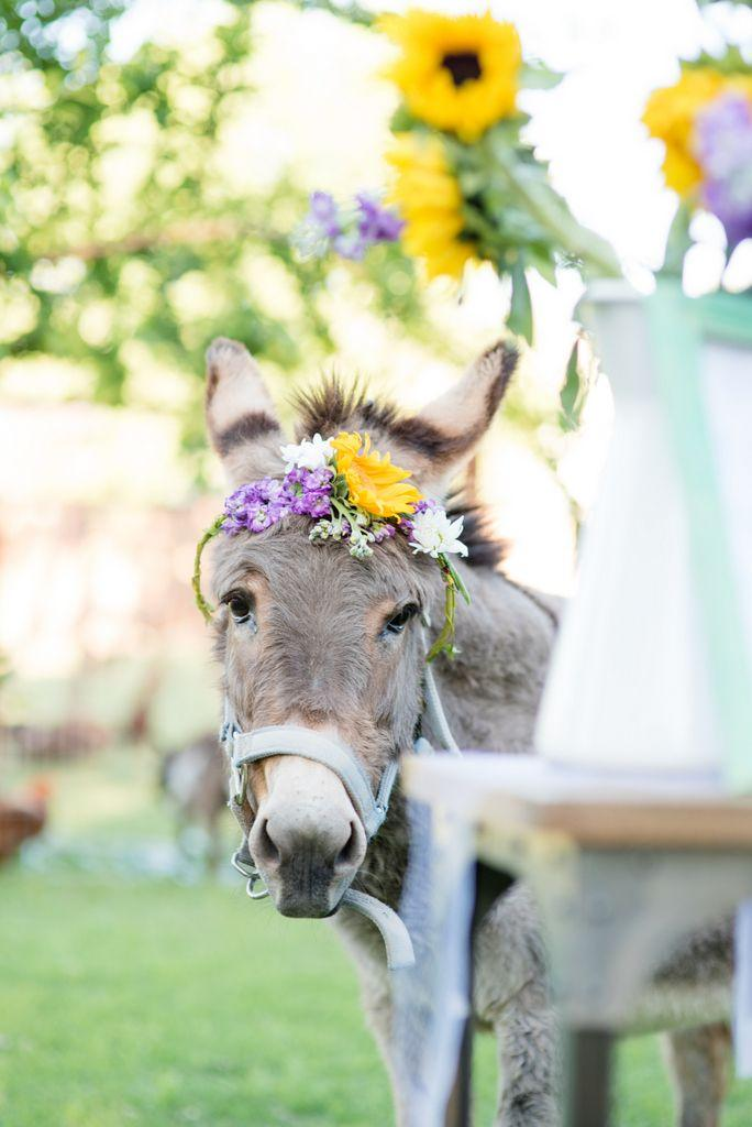 Wedding - Cute Pets And Lovely Animals