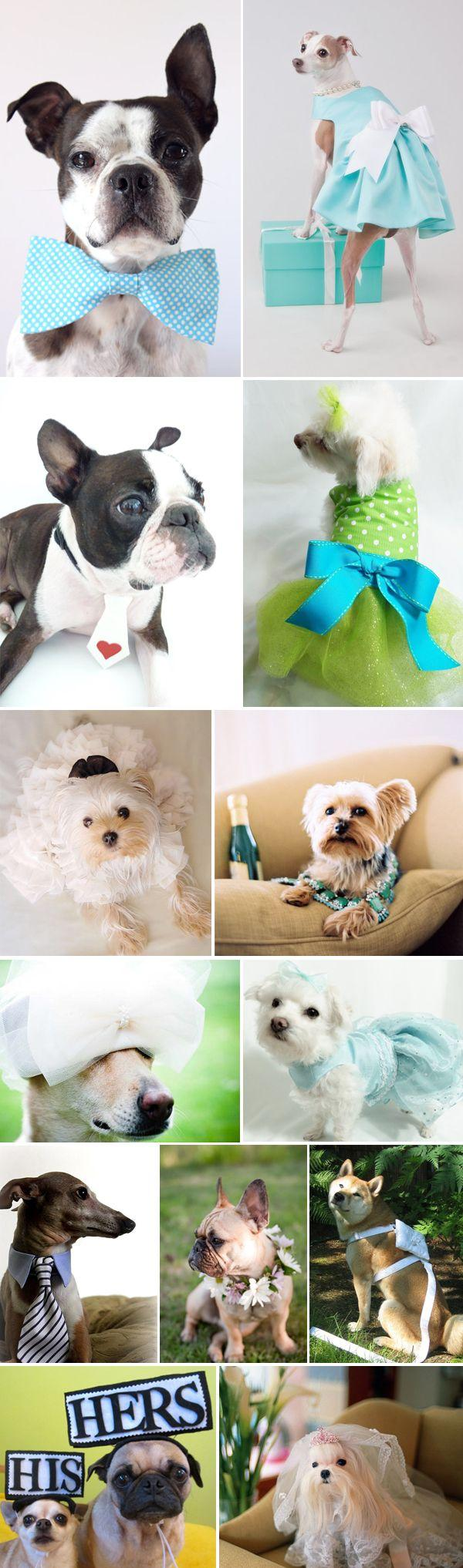 Mariage - Super Cute! Wedding Dogs