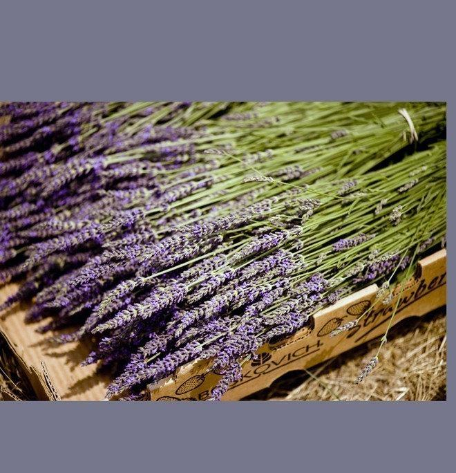 Mariage - 250 French Lavender Stems  Dried Flowers Wedding Decor Centerpiece Table Arrangement